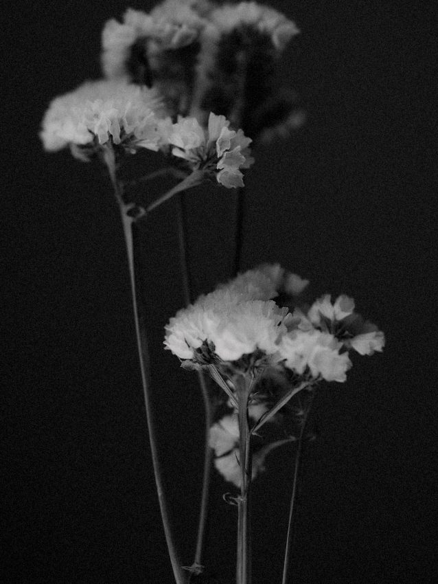 Black and white art photograph of dried flowers