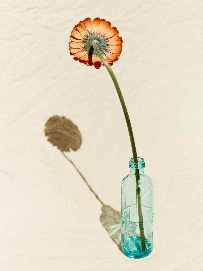 FLOWERS_018-1